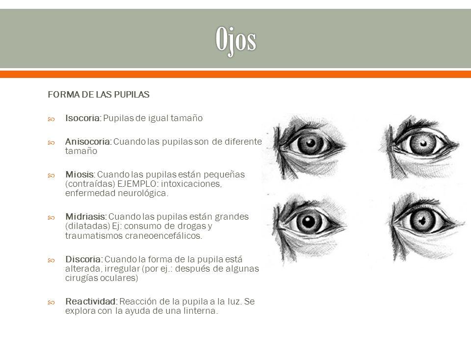 Inspección de la nariz externa: 1.Forma 2. Tamaño 3.