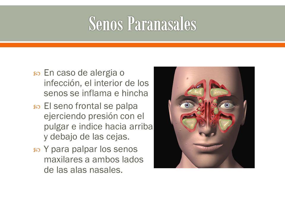 En caso de alergia o infección, el interior de los senos se inflama e hincha El seno frontal se palpa ejerciendo presión con el pulgar e indice hacia