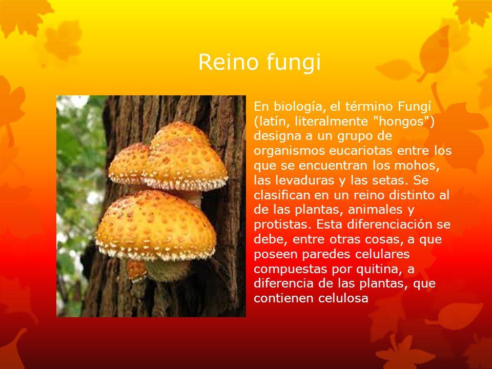 Reino fungi En biología, el término Fungí (latín, literalmente