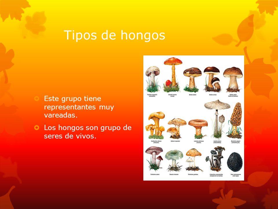 Tipos de hongos Este grupo tiene representantes muy vareadas. Los hongos son grupo de seres de vivos.