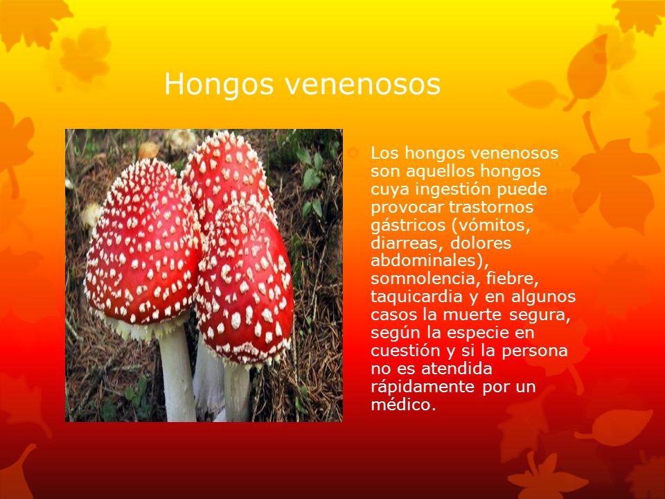 Hongos venenosos Los hongos venenosos son aquellos hongos cuya ingestión puede provocar trastornos gástricos (vómitos, diarreas, dolores abdominales),