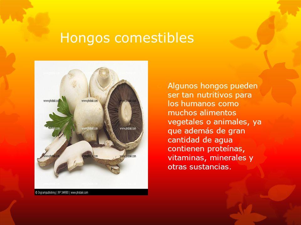 Hongos comestibles Algunos hongos pueden ser tan nutritivos para los humanos como muchos alimentos vegetales o animales, ya que además de gran cantida