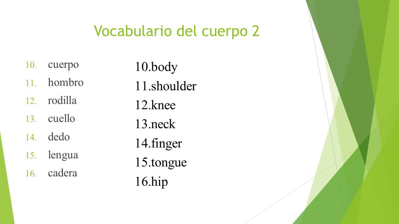 Vocabulario del cuerpo 2 10. cuerpo 11. hombro 12. rodilla 13. cuello 14. dedo 15. lengua 16. cadera 10.body 11.shoulder 12.knee 13.neck 14.finger 15.