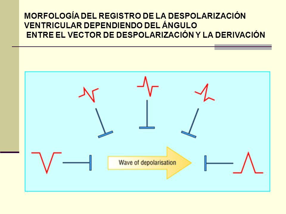 MORFOLOGÍA DEL REGISTRO DE LA DESPOLARIZACIÓN VENTRICULAR DEPENDIENDO DEL ÁNGULO ENTRE EL VECTOR DE DESPOLARIZACIÓN Y LA DERIVACIÓN