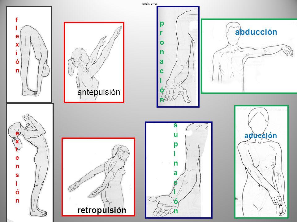 MOVIMIENTOS Flexión acercar puntos distales Aducción acercar a la línea media Antepulsión hacia delante Pronación hacia abajo Extensión alejar puntos