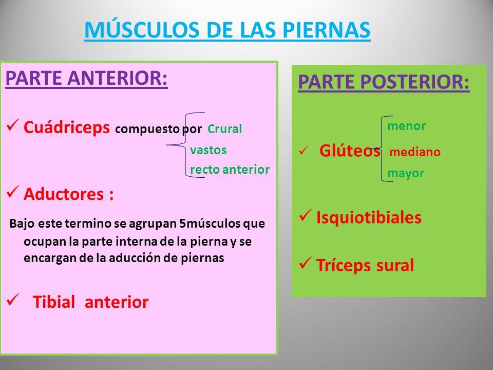 Un músculo puede producir movimiento, pero no es forzosamente él quien lo produce En este caso es el recto del abdomen quien realiza la flx., acercand