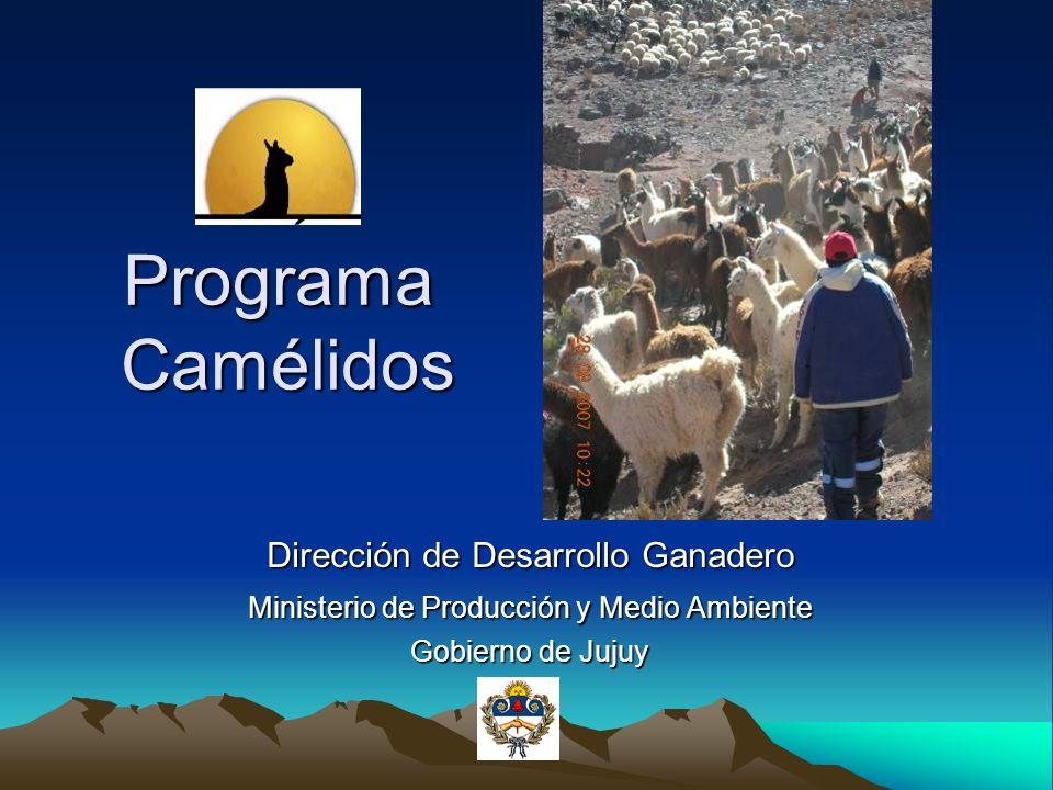 Programa Camélidos Dirección de Desarrollo Ganadero Ministerio de Producción y Medio Ambiente Gobierno de Jujuy