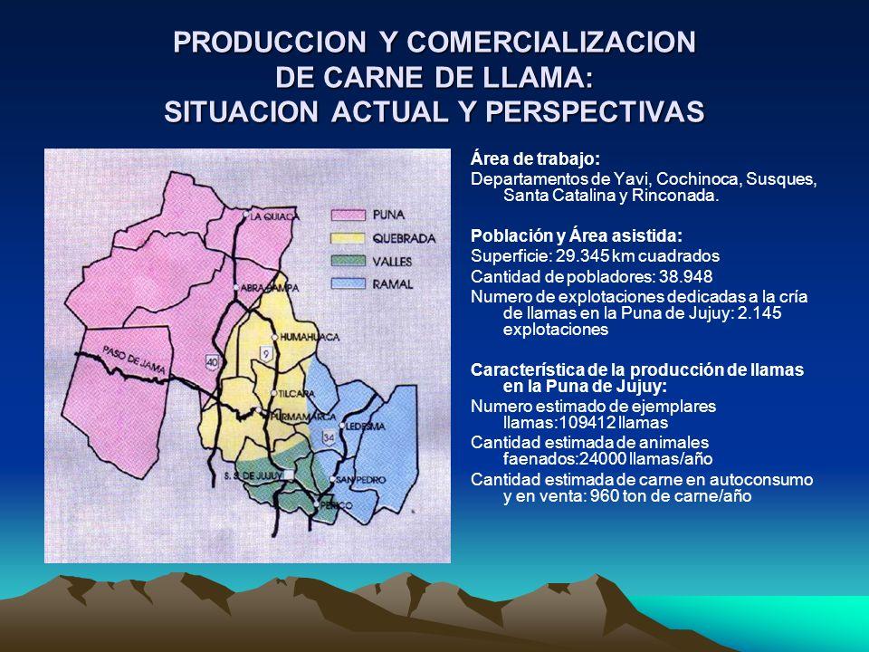 PRODUCCION Y COMERCIALIZACION DE CARNE DE LLAMA: SITUACION ACTUAL Y PERSPECTIVAS Área de trabajo: Departamentos de Yavi, Cochinoca, Susques, Santa Cat