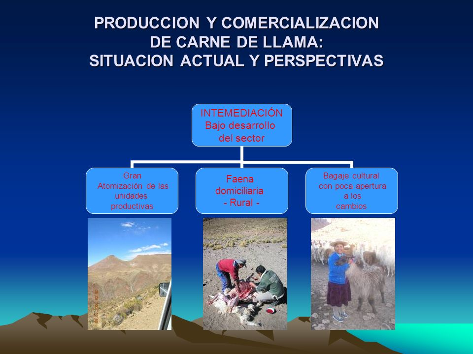 PRODUCCION Y COMERCIALIZACION DE CARNE DE LLAMA: SITUACION ACTUAL Y PERSPECTIVAS INTEMEDIACIÓN Bajo desarrollo del sector Gran Atomización de las unid