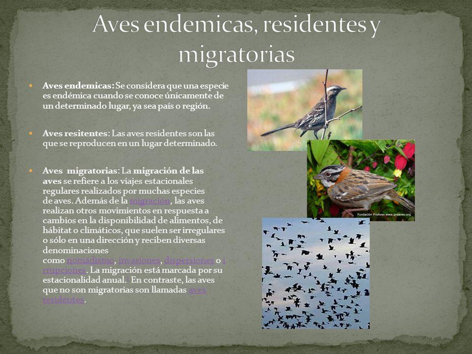 Aves endemicas: Se considera que una especie es endémica cuando se conoce únicamente de un determinado lugar, ya sea país o región.