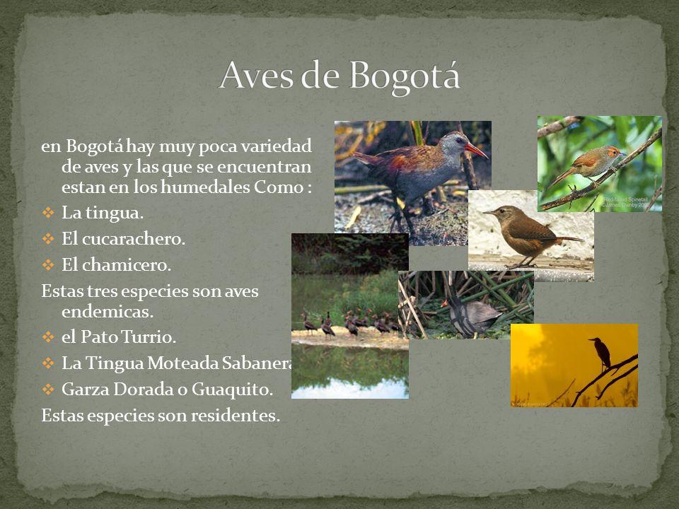en Bogotá hay muy poca variedad de aves y las que se encuentran estan en los humedales Como : La tingua.