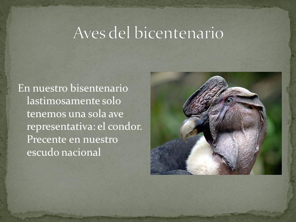 En nuestro bisentenario lastimosamente solo tenemos una sola ave representativa: el condor.