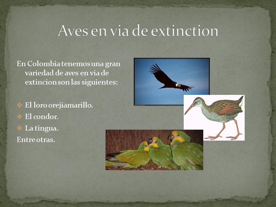 En Colombia tenemos una gran variedad de aves en via de extincion son las siguientes: El loro orejiamarillo.