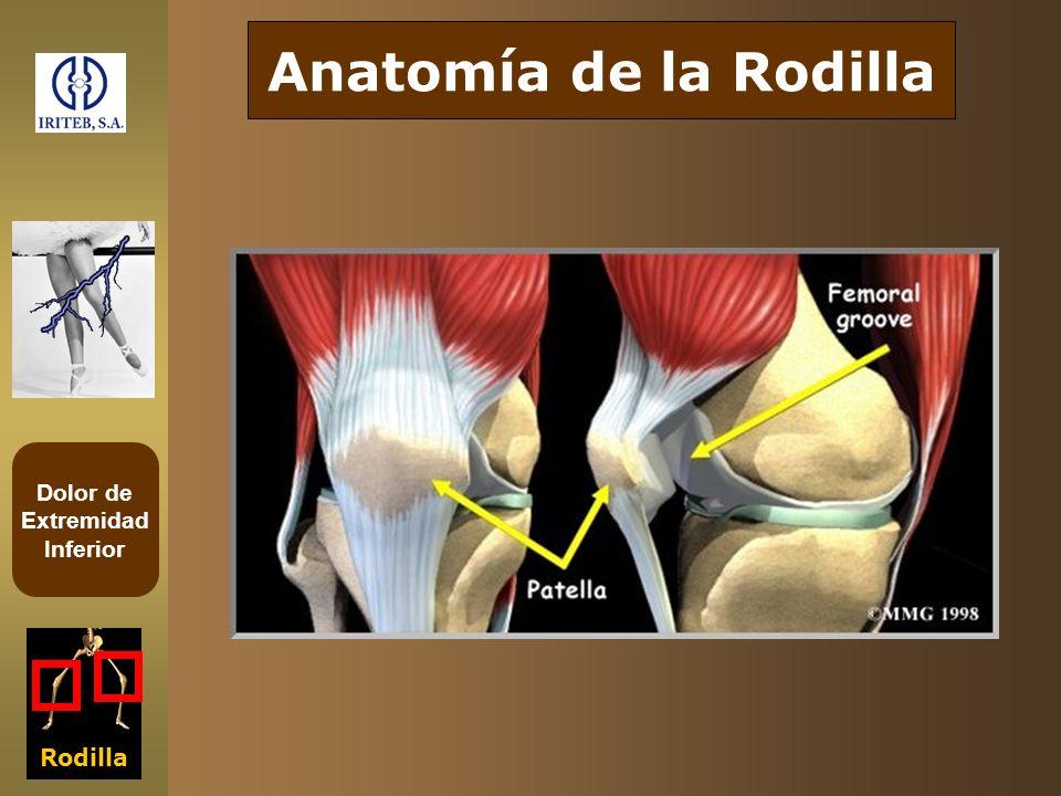 Dolor de Extremidad Inferior Rodilla Anatomía de la Rodilla