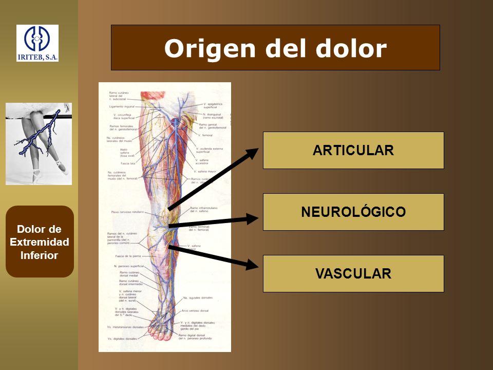 Dolor de Extremidad Inferior Origen del dolor ARTICULAR NEUROLÓGICO VASCULAR