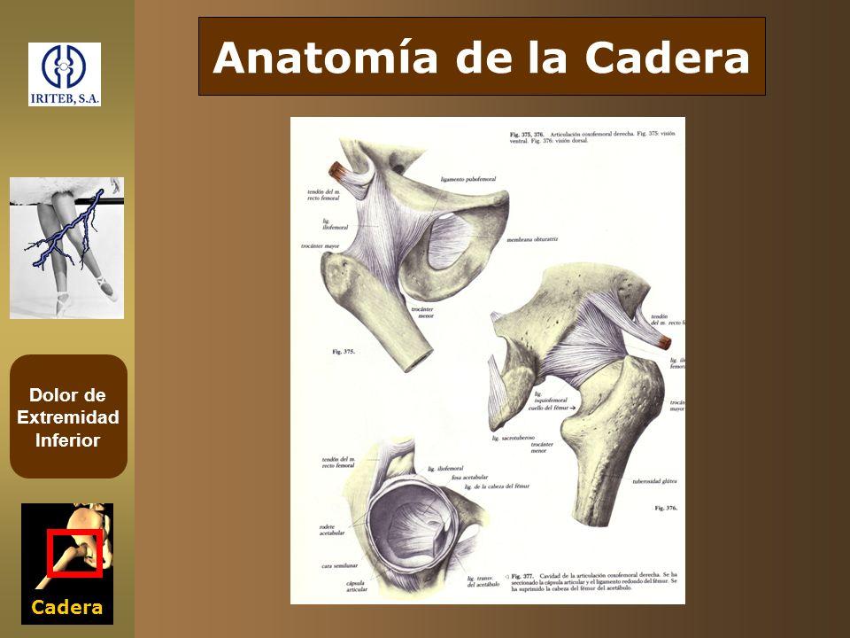 Dolor de Extremidad Inferior Cadera Cadera en la infancia -Cadera luxable -Enfermedad de Perthes -Disendocrinias -Enfermedades reumáticas -Cadera luxable -Enfermedad de Perthes -Disendocrinias -Enfermedades reumáticas