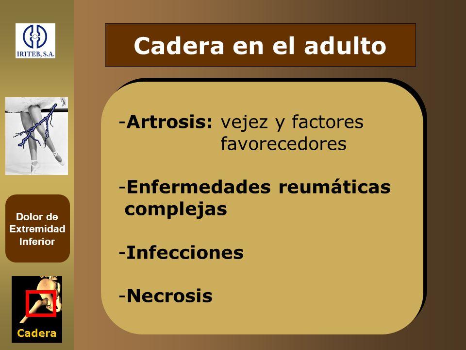 Dolor de Extremidad Inferior Cadera Cadera en el adulto -Artrosis: vejez y factores favorecedores -Enfermedades reumáticas complejas -Infecciones -Nec