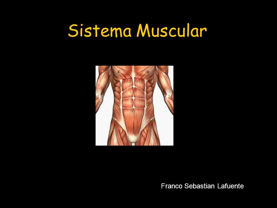 Sistema Muscular Franco Sebastian Lafuente