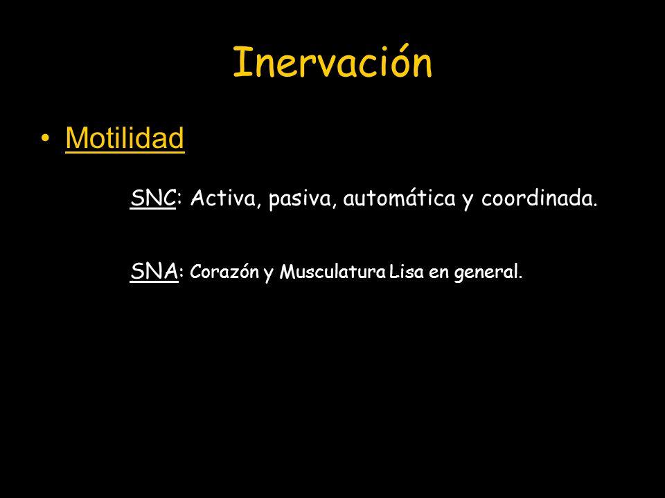 Inervación Motilidad SNC: Activa, pasiva, automática y coordinada. SNA : Corazón y Musculatura Lisa en general.