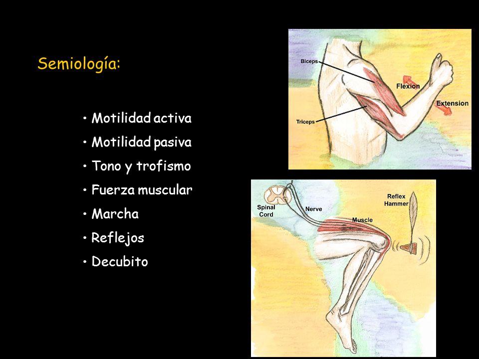 Semiología: Motilidad activa Motilidad pasiva Tono y trofismo Fuerza muscular Marcha Reflejos Decubito