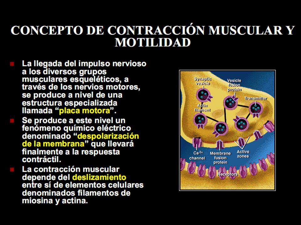 Clínica Músculo Esquelético Miopatías adquiridas Miositis.