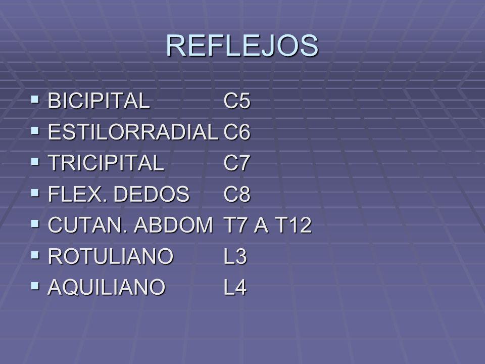 REFLEJOS BICIPITALC5 BICIPITALC5 ESTILORRADIALC6 ESTILORRADIALC6 TRICIPITALC7 TRICIPITALC7 FLEX.