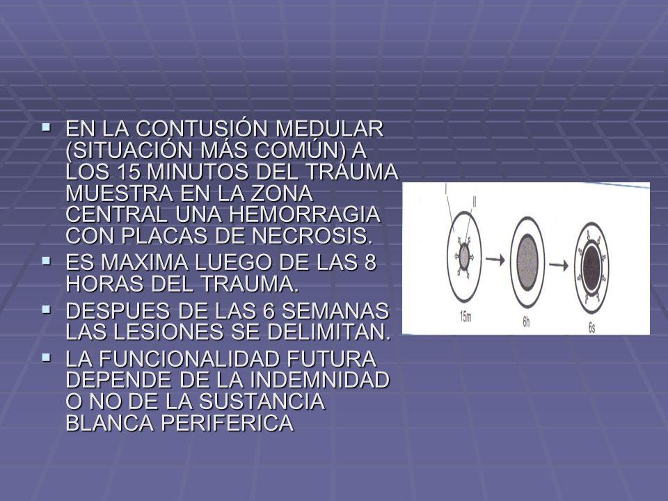 EN LA CONTUSIÓN MEDULAR (SITUACIÓN MÁS COMÚN) A LOS 15 MINUTOS DEL TRAUMA MUESTRA EN LA ZONA CENTRAL UNA HEMORRAGIA CON PLACAS DE NECROSIS.