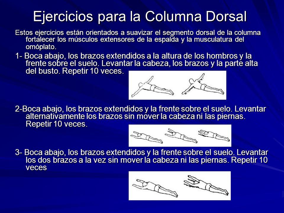 Ejercicios para la Columna Dorsal Estos ejercicios están orientados a suavizar el segmento dorsal de la columna fortalecer los músculos extensores de
