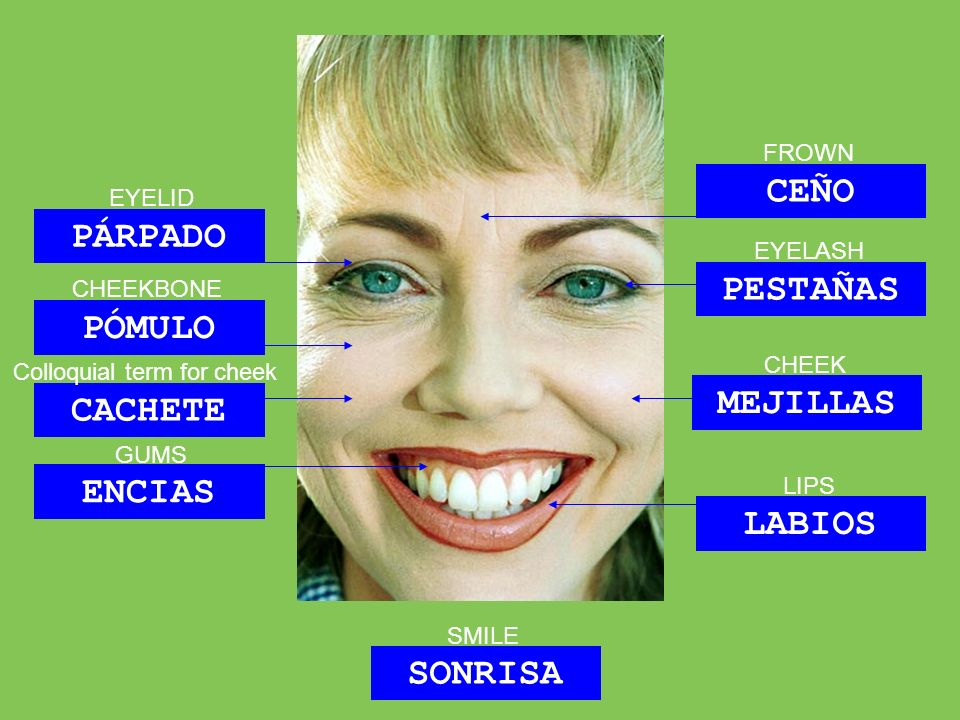 SONRISA PÓMULO PÁRPADO PESTAÑAS MEJILLAS CACHETE ENCIAS LABIOS CEÑO EYELID CHEEKBONE CHEEK GUMS LIPS EYELASH SMILE Colloquial term for cheek FROWN