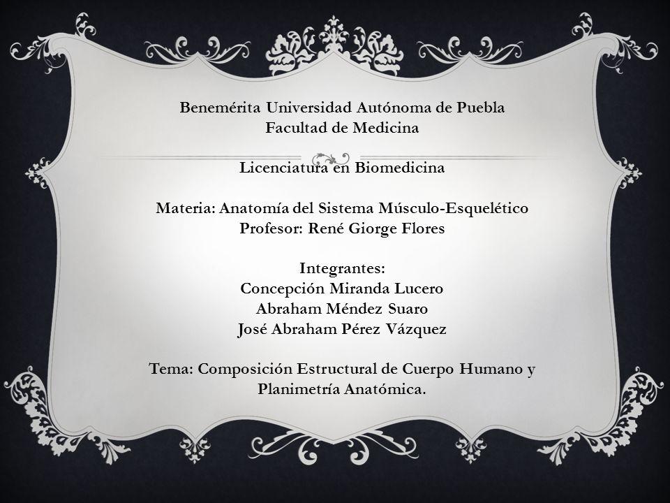 Benemérita Universidad Autónoma de Puebla Facultad de Medicina Licenciatura en Biomedicina Materia: Anatomía del Sistema Músculo-Esquelético Profesor: