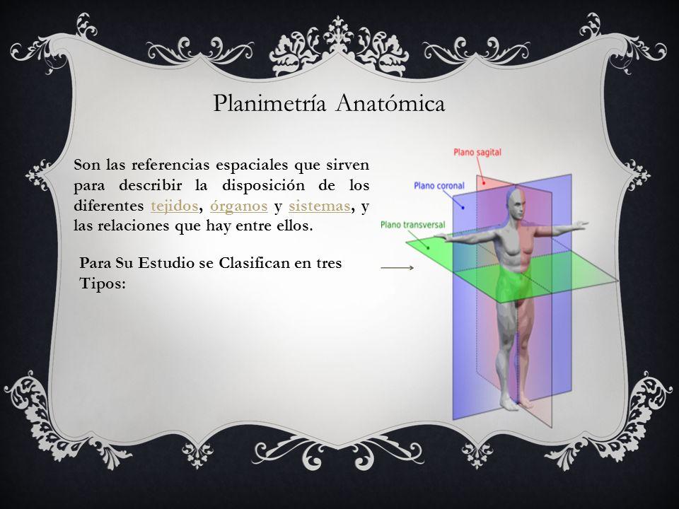 Planimetría Anatómica Son las referencias espaciales que sirven para describir la disposición de los diferentes tejidos, órganos y sistemas, y las rel