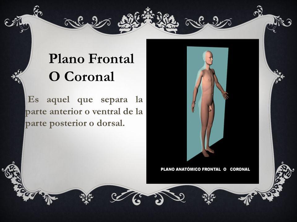 Plano Frontal O Coronal Es aquel que separa la parte anterior o ventral de la parte posterior o dorsal.