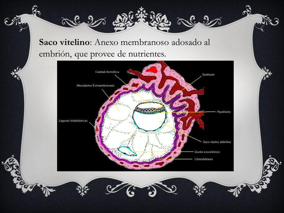Saco vitelino: Anexo membranoso adosado al embrión, que provee de nutrientes.