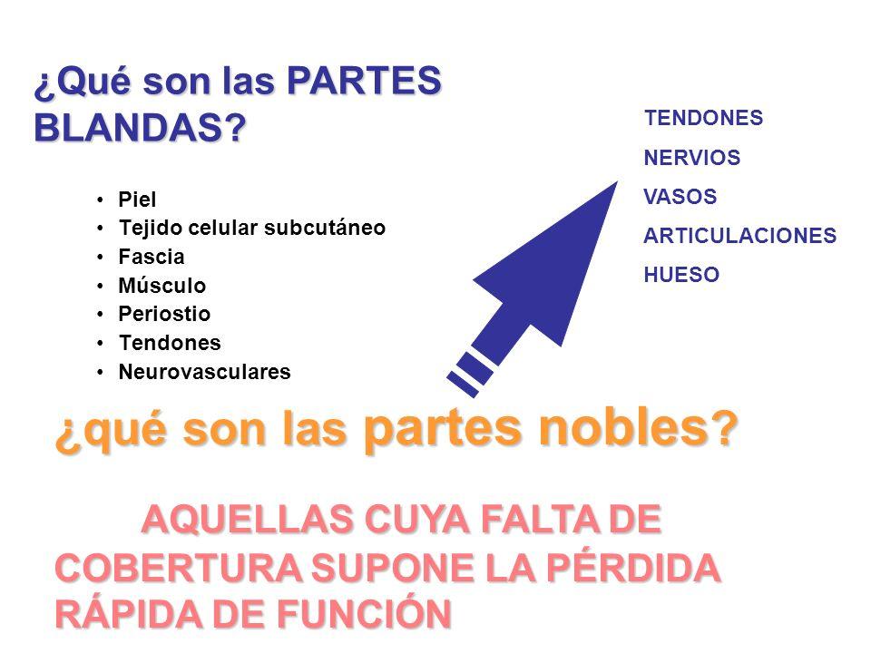 Piel Tejido celular subcutáneo Fascia Músculo Periostio Tendones Neurovasculares ¿qué son las partes nobles .