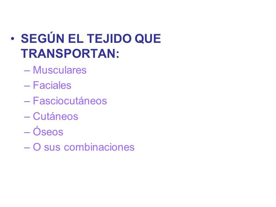 SEGÚN EL TEJIDO QUE TRANSPORTAN: –Musculares –Faciales –Fasciocutáneos –Cutáneos –Óseos –O sus combinaciones