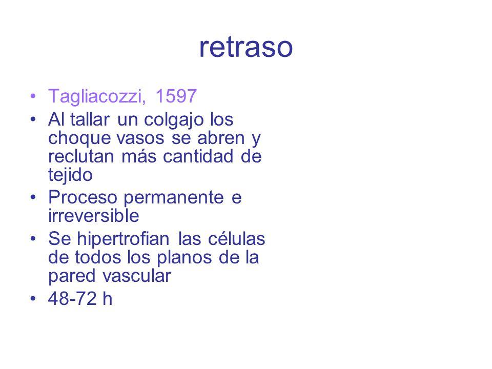 retraso Tagliacozzi, 1597 Al tallar un colgajo los choque vasos se abren y reclutan más cantidad de tejido Proceso permanente e irreversible Se hipertrofian las células de todos los planos de la pared vascular 48-72 h