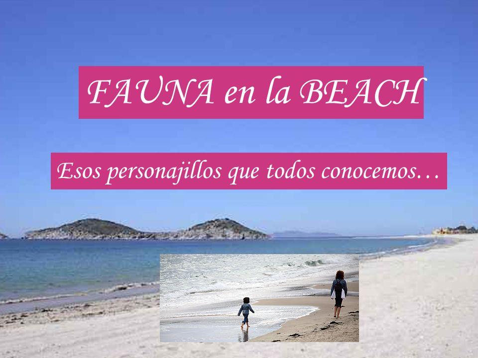 FAUNA en la BEACH Esos personajillos que todos conocemos…