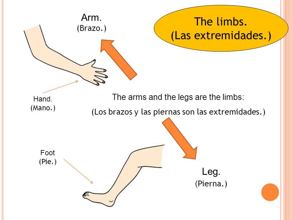 The limbs.