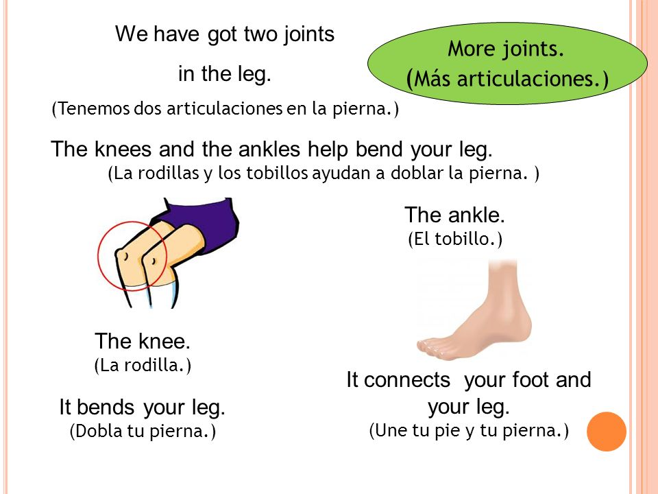 More joints.( Más articulaciones.) We have got two joints in the leg.