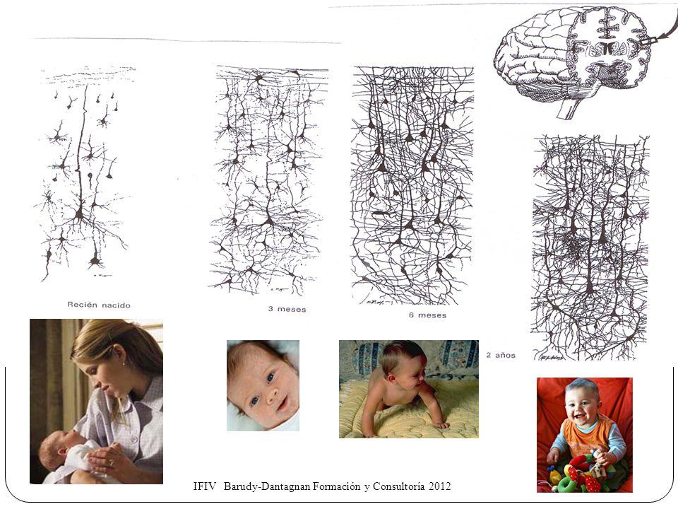 LA GÉNESIS DE LOS BUENOS TRATOS : 1.Fuentes biológicas Hormonas : oxitocina, vasopresina y los péptidos opiodes endógenos Organización cerebral (mente) dependiente del entorno humano 2.Parentalidad positivas: Capacidades parentales Capacidad de apego Empatía 4.