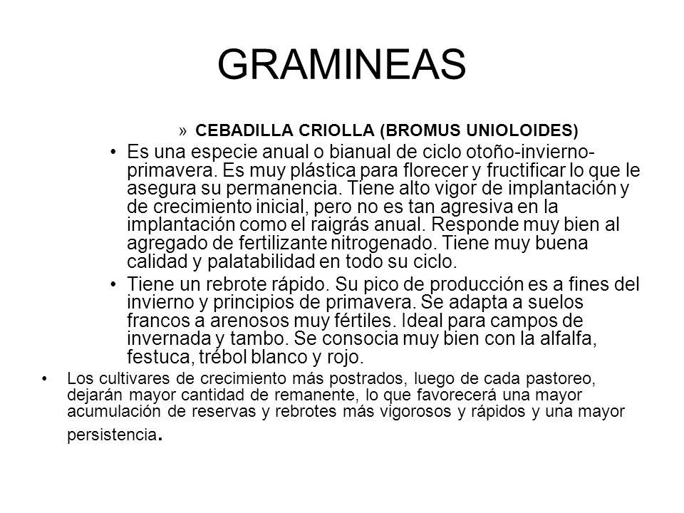 GRAMINEAS »CEBADILLA CRIOLLA (BROMUS UNIOLOIDES) Es una especie anual o bianual de ciclo otoño-invierno- primavera. Es muy plástica para florecer y fr