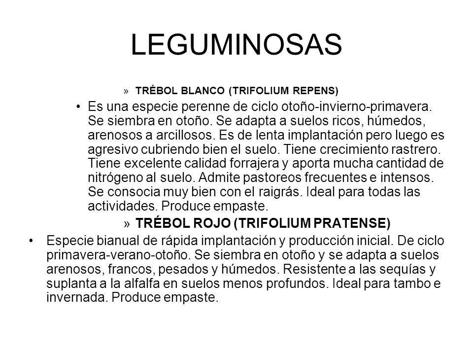 LEGUMINOSAS »TRÉBOL BLANCO (TRIFOLIUM REPENS) Es una especie perenne de ciclo otoño-invierno-primavera. Se siembra en otoño. Se adapta a suelos ricos,