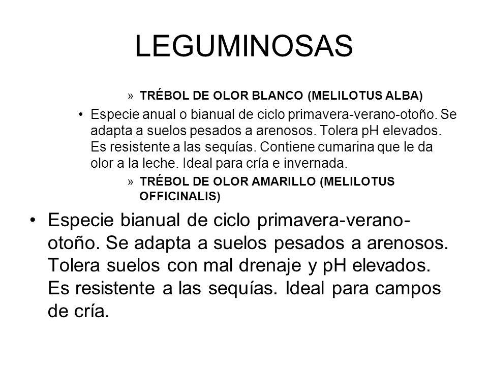 LEGUMINOSAS »TRÉBOL DE OLOR BLANCO (MELILOTUS ALBA) Especie anual o bianual de ciclo primavera-verano-otoño. Se adapta a suelos pesados a arenosos. To