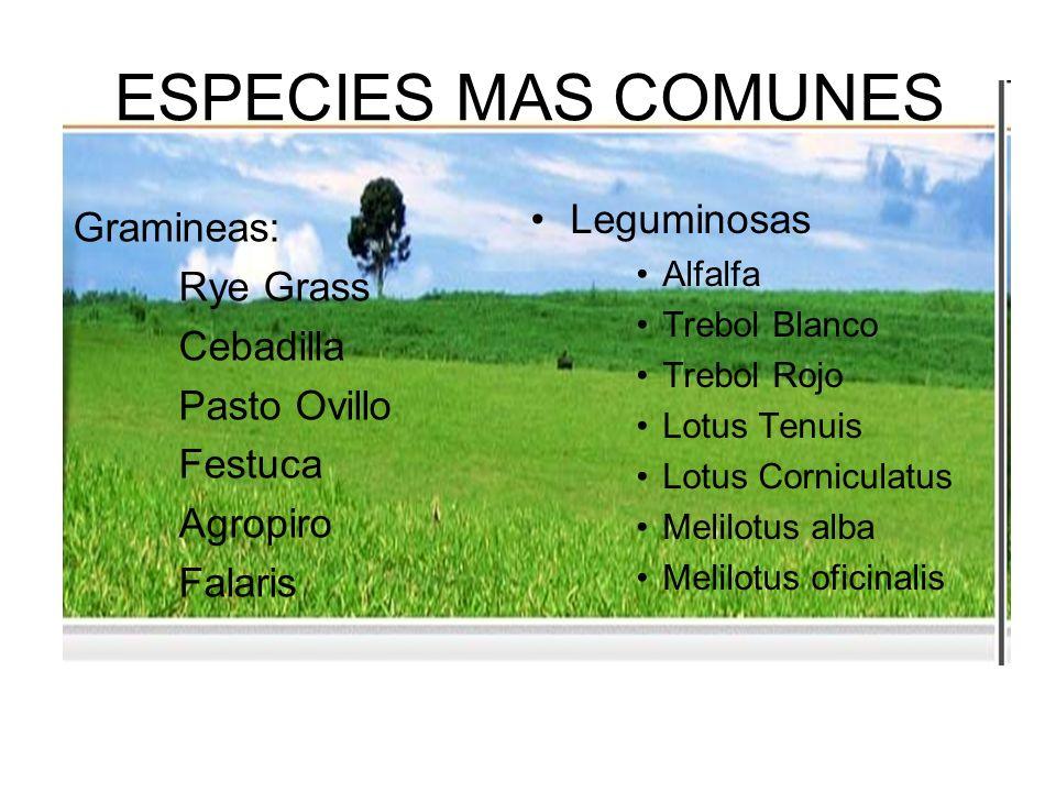ESPECIES MAS COMUNES Gramineas: Rye Grass Cebadilla Pasto Ovillo Festuca Agropiro Falaris Leguminosas Alfalfa Trebol Blanco Trebol Rojo Lotus Tenuis L