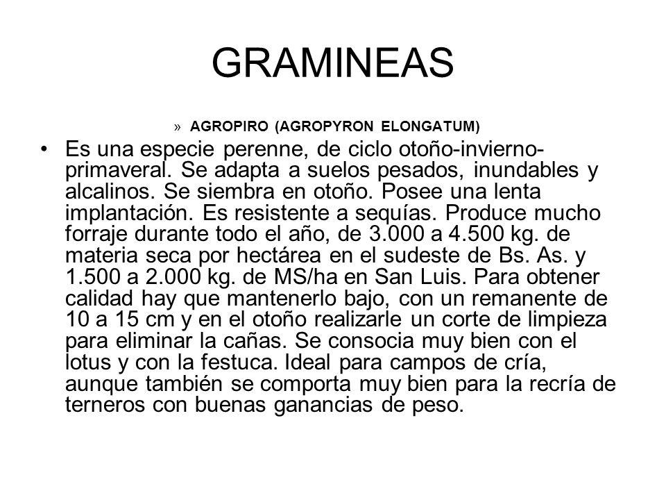 GRAMINEAS »AGROPIRO (AGROPYRON ELONGATUM) Es una especie perenne, de ciclo otoño-invierno- primaveral. Se adapta a suelos pesados, inundables y alcali
