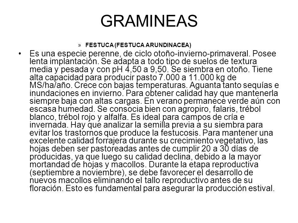 GRAMINEAS »FESTUCA (FESTUCA ARUNDINACEA) Es una especie perenne, de ciclo otoño-invierno-primaveral. Posee lenta implantación. Se adapta a todo tipo d