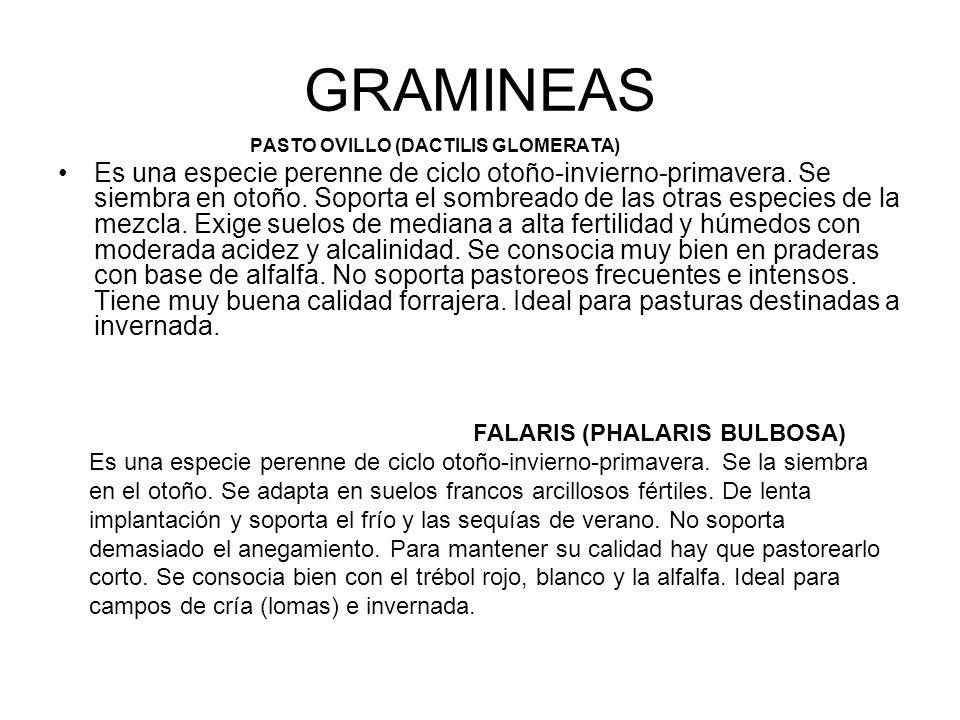 GRAMINEAS PASTO OVILLO (DACTILIS GLOMERATA) Es una especie perenne de ciclo otoño-invierno-primavera. Se siembra en otoño. Soporta el sombreado de las