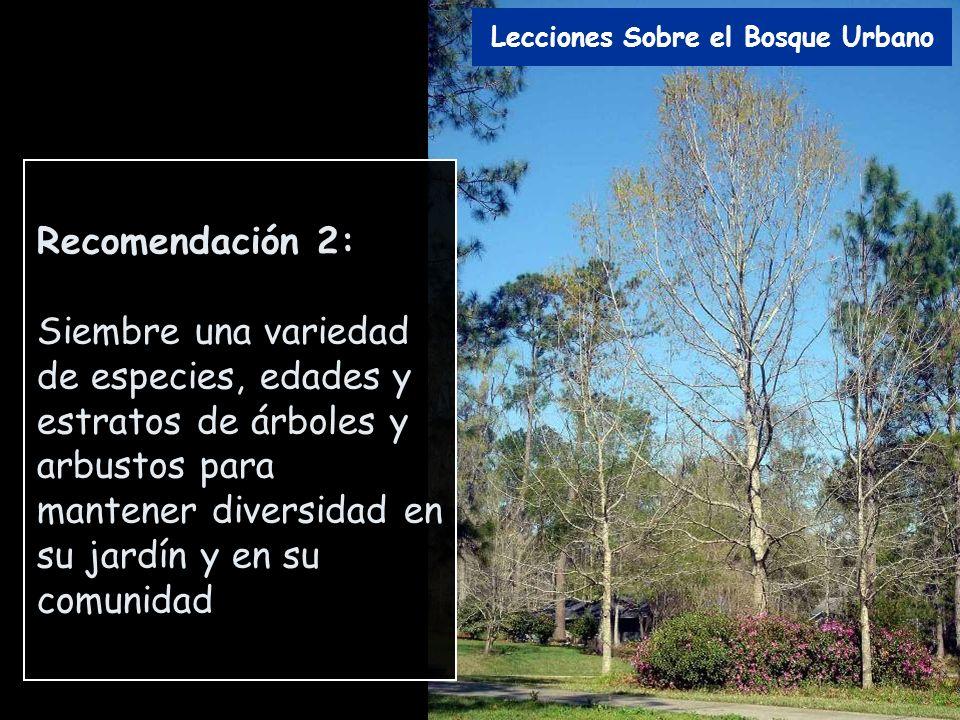 Recomendación 2: Siembre una variedad de especies, edades y estratos de árboles y arbustos para mantener diversidad en su jardín y en su comunidad Lec