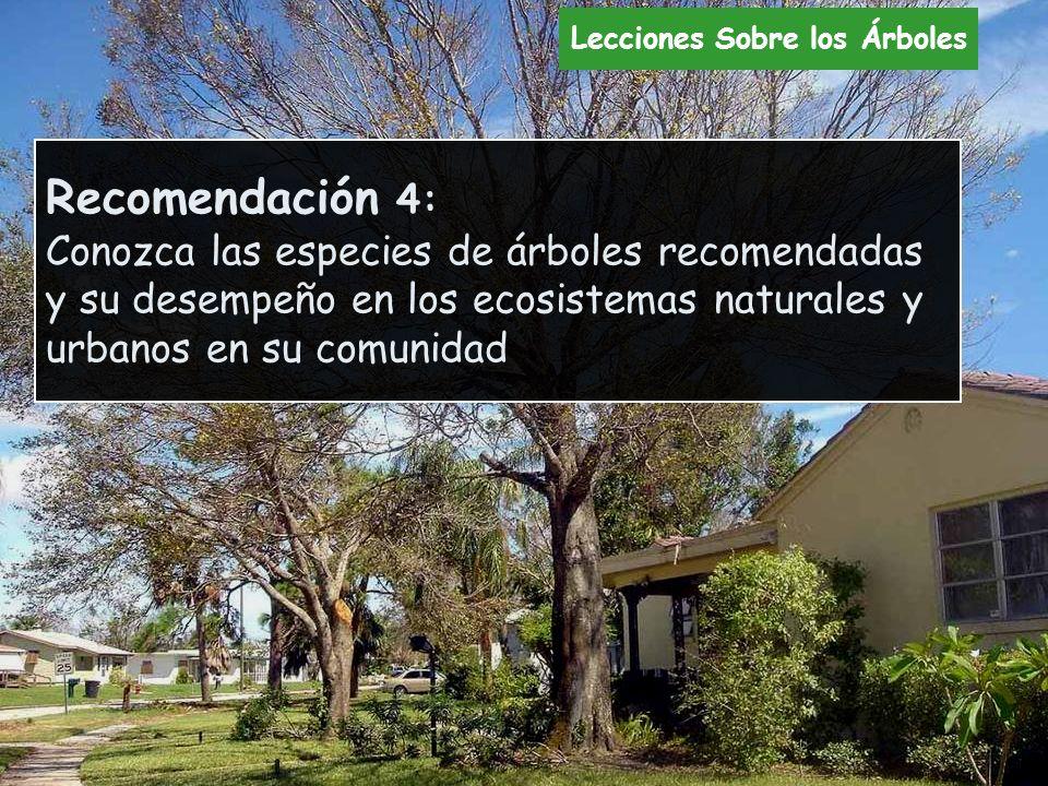Recomendación 4: Conozca las especies de árboles recomendadas y su desempeño en los ecosistemas naturales y urbanos en su comunidad Lecciones Sobre lo