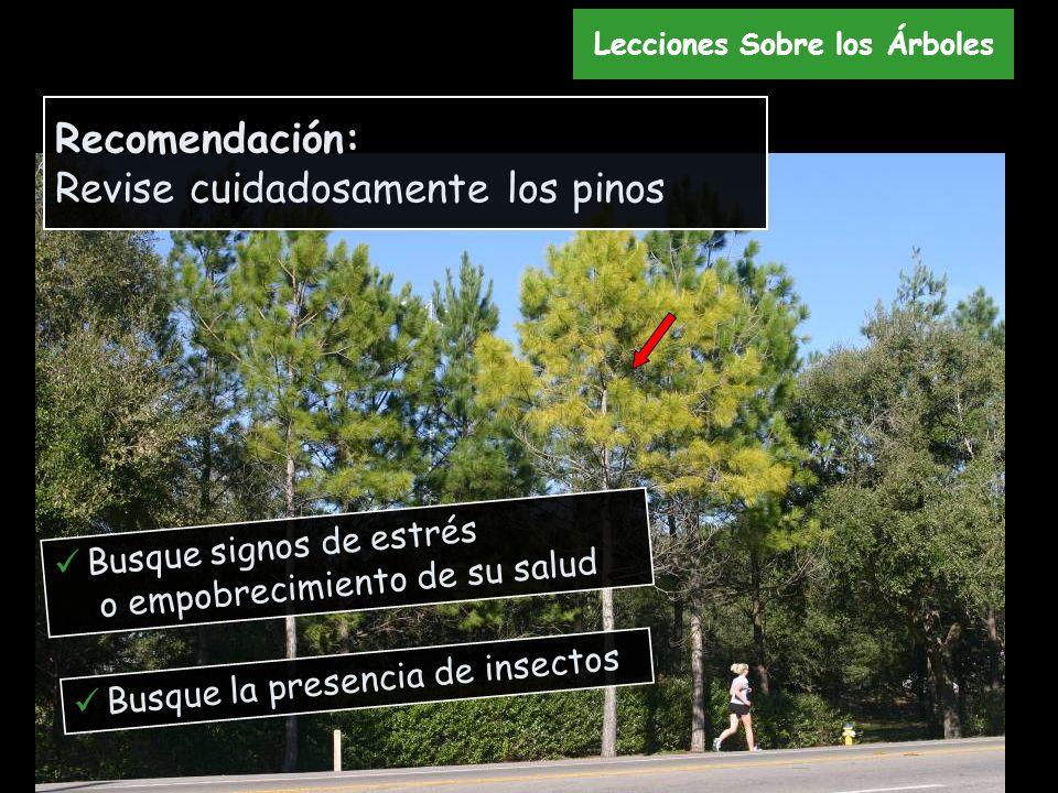 Busque signos de estrés o empobrecimiento de su salud Busque la presencia de insectos Recomendación: Revise cuidadosamente los pinos Lecciones Sobre l